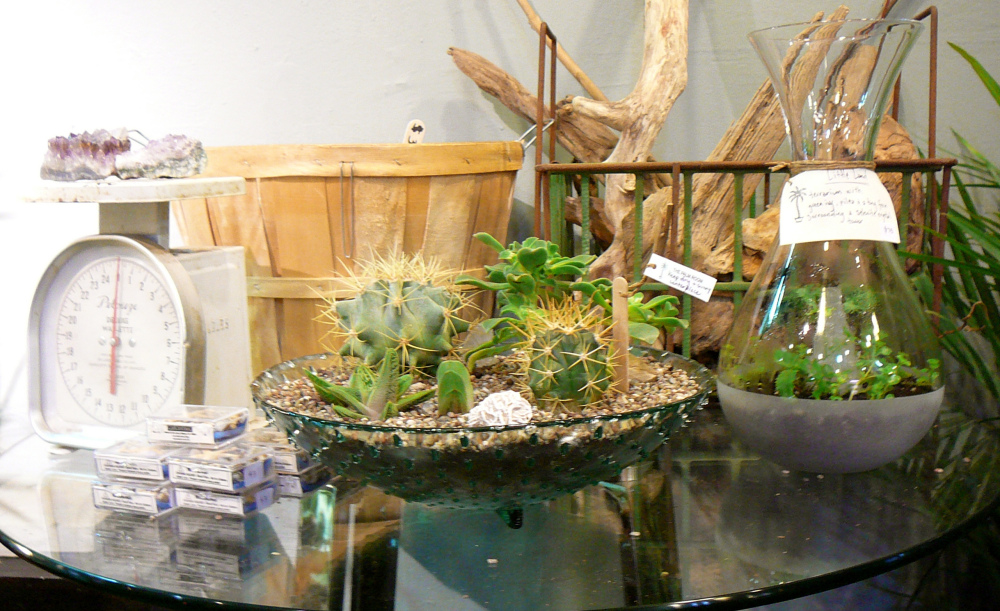 The Palm Room: Seattle's Little Shop of Botanical Curiosities