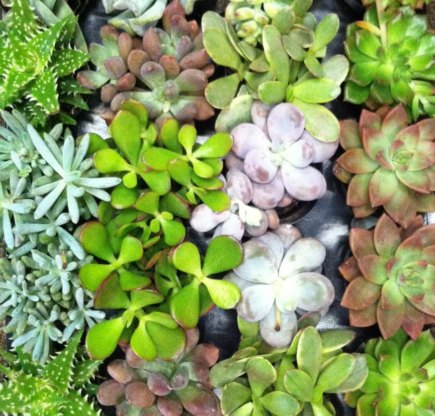 Succulent vendors at the Northwest Flower and Garden Show