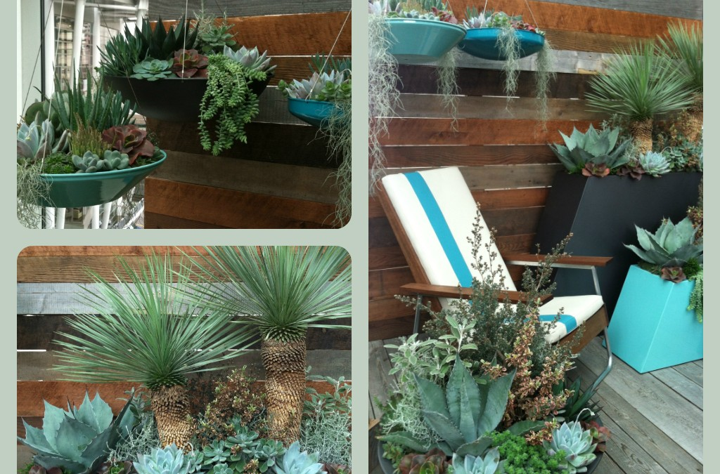 Succulents Seduce at the 2014 Northwest Flower and Garden Show