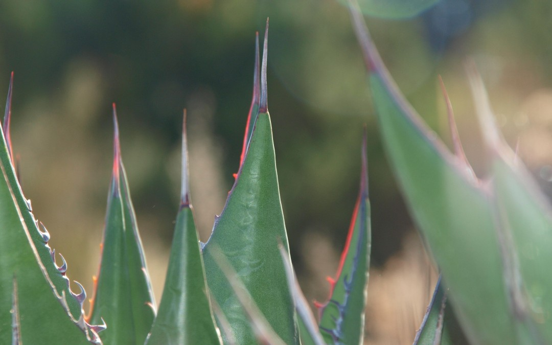 Visit the Rancho Santa Ana Botanical Garden and Go Native
