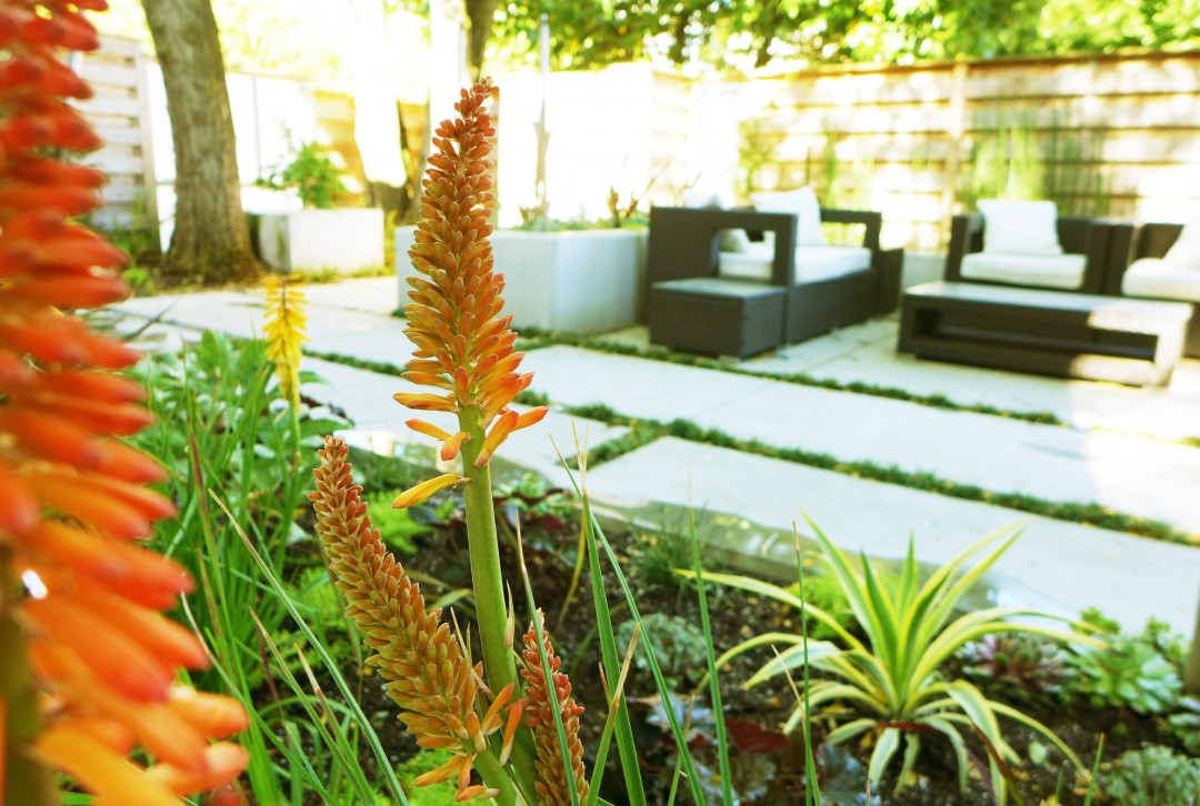 Contemporary Planting