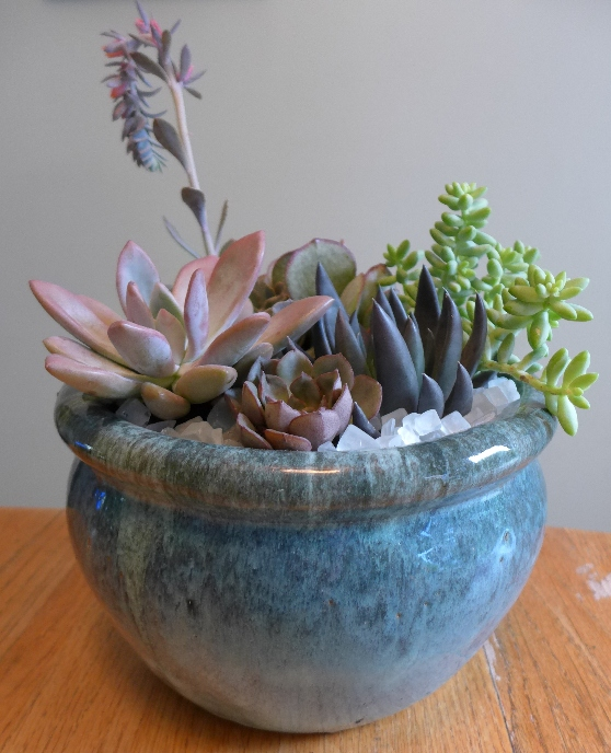 blue succulent pot