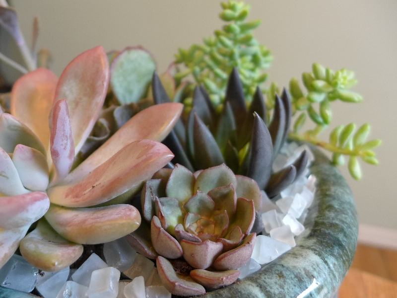 How to create a succulent container garden olander garden design - How to make a succulent container garden ...