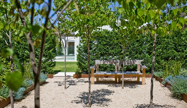 Trees for a Contemporary Garden