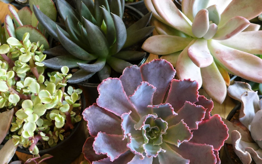 How To Create A Succulent Container Garden Olander - how to design a succulent garden