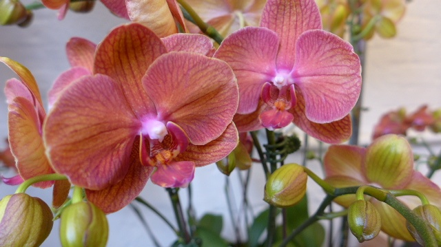 The Seattle Wholesale Growers Market: Elegant Blooms and More