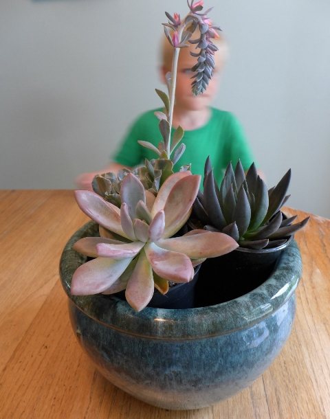 Succulent helper